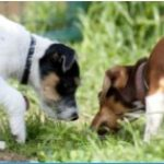 DogBase Kurs (Mittwoch)