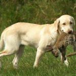 Jagd-Ersatz-Kurs (Donnerstag)