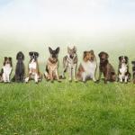 Familienhund-Ausbildung (Sonntag)
