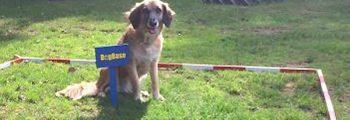 DogBase Training
