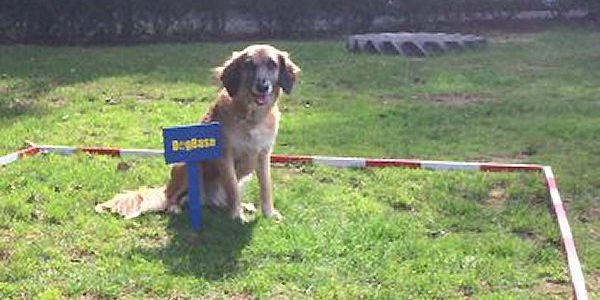 DogBase Training