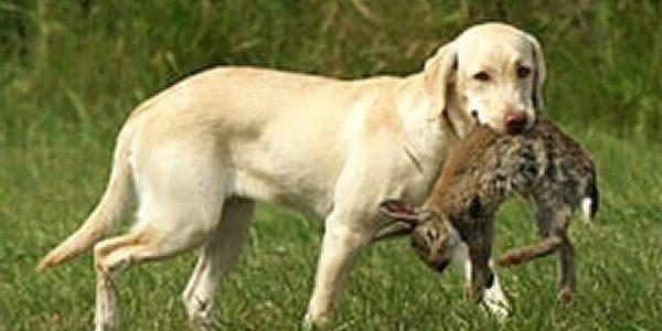 Jagd-Ersatz-Training