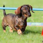 Crossdogging (Freitag)